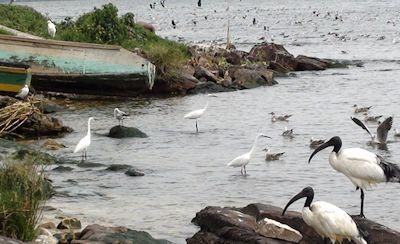 Musambwa Island