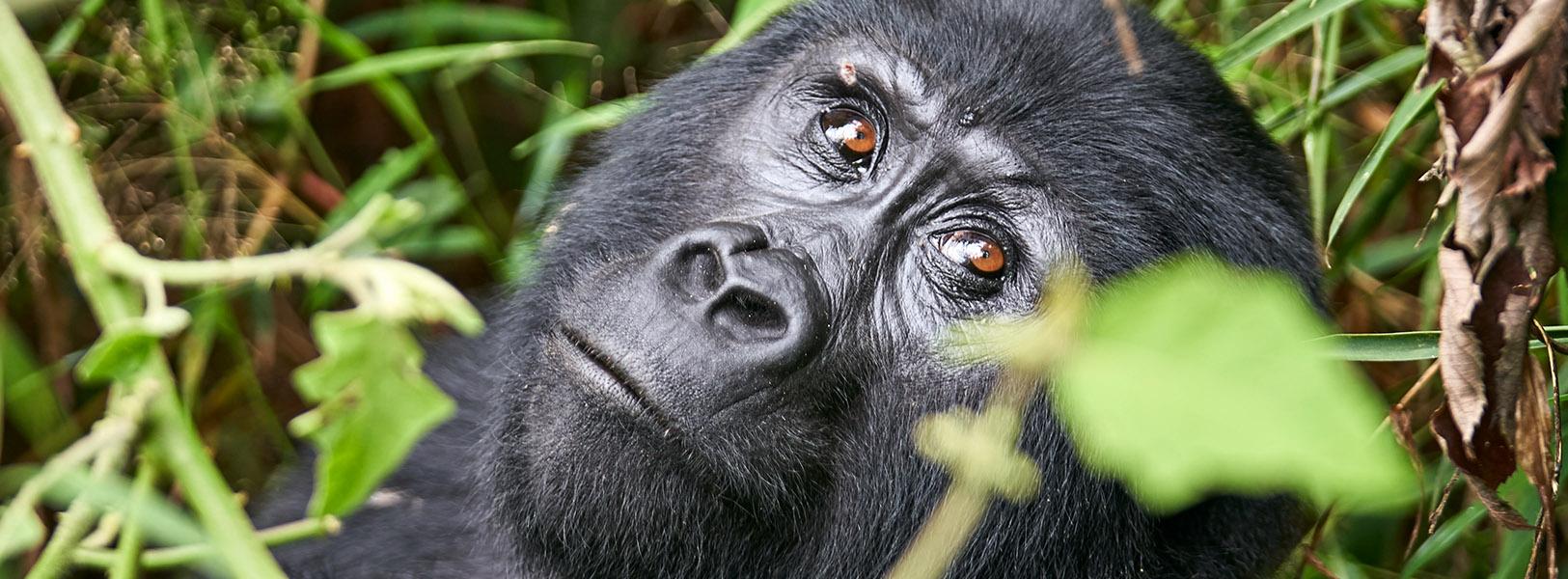 Uganda safaris, Wildlife safaris in Uganda