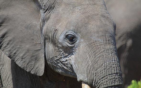 masai mara national reserve, Lake Nakuru national park, Lake Nakuru, Kenya safaris, wildlife safaris in Kenya