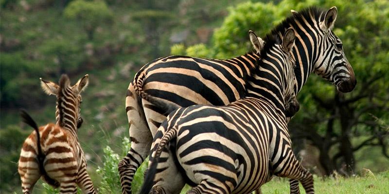 Rwanda-Akagera Wildlife Safari