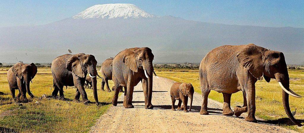 Safari Photography tips in Africa