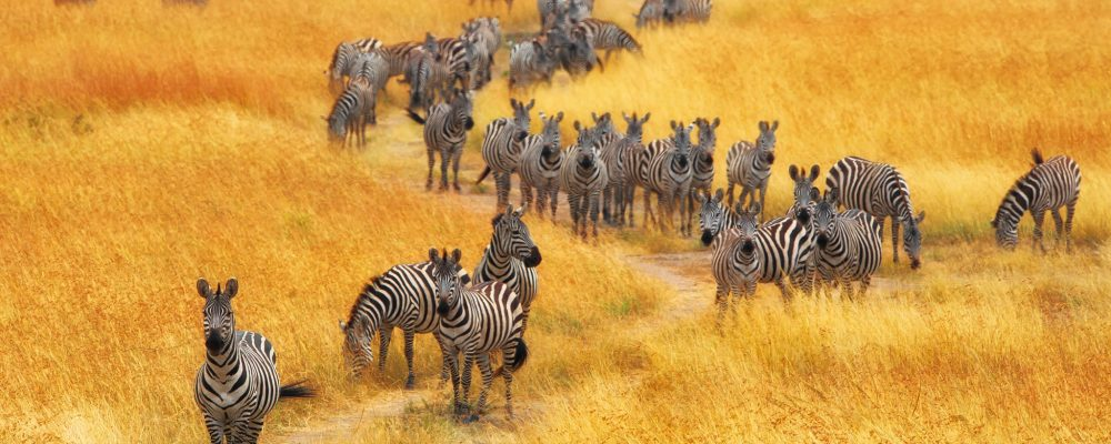 Tanzania Wildlife Safaris, Tanzania wildlife