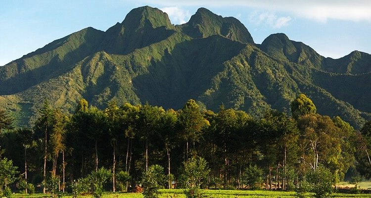 Volcanoes Natinal Park Rwanda