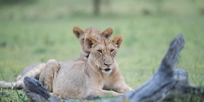 selous game reserve Tanzania wildlife safari.1 jpg