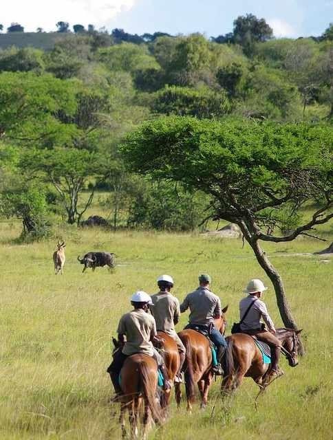 Horse ride in uganda