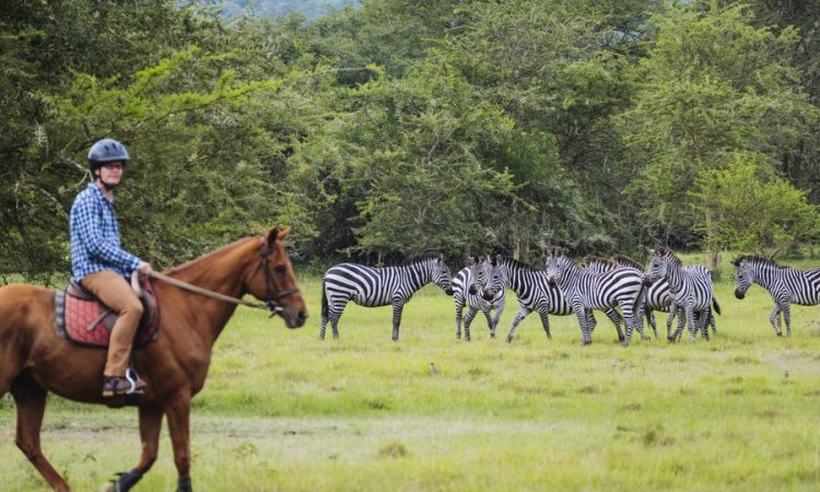 Horse back safari in Lake Mburo national park