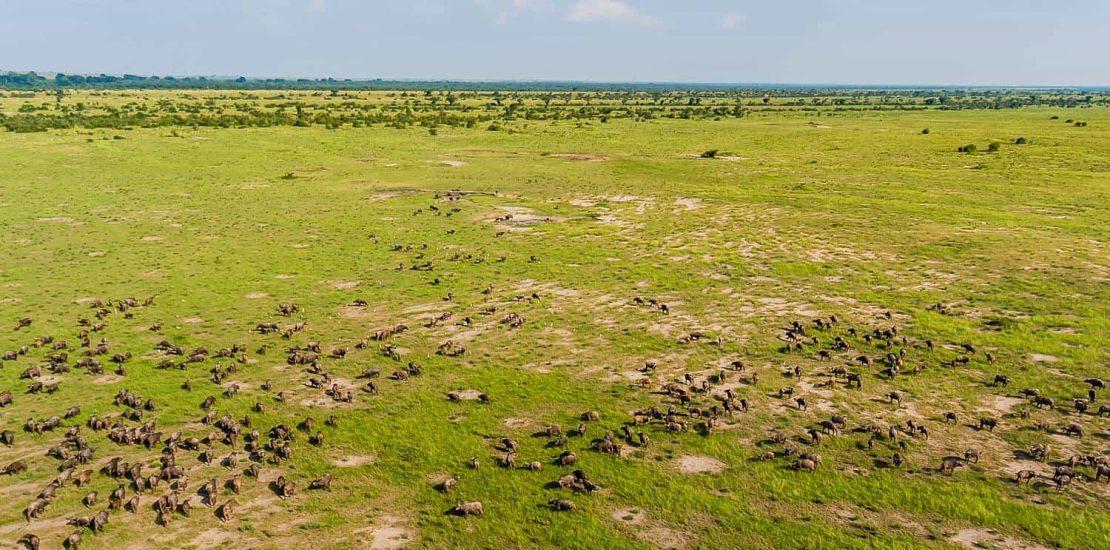 Mweya plains