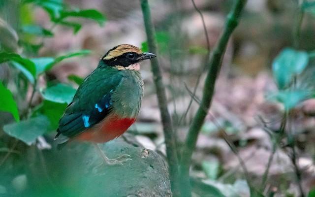 Birding in kibale national park