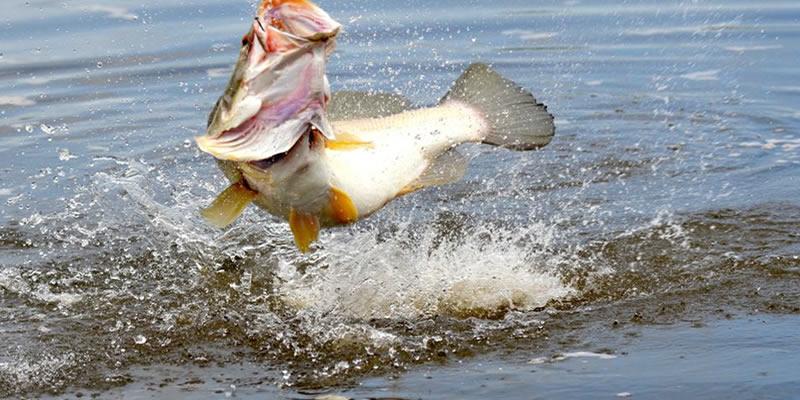 Sport fishing in Uganda